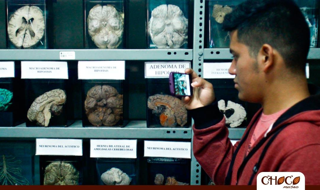 museo del cerebro en lima